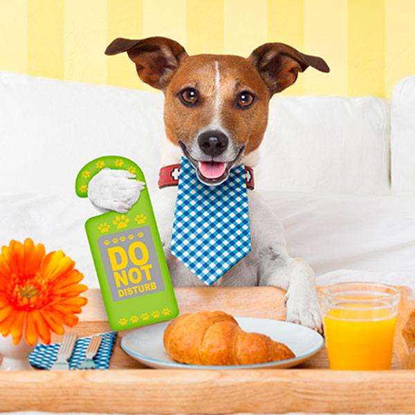 good dog hotel